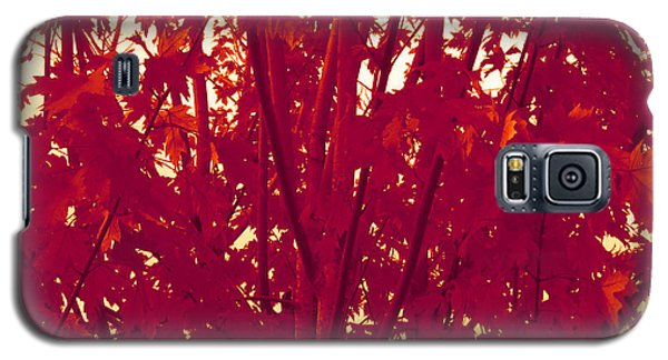 Fall Leaves #2 Galaxy S5 Case