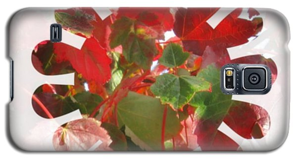 Fall Leaves #9 Galaxy S5 Case