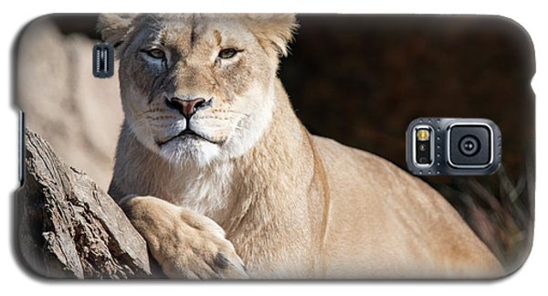 Fall Lioness Galaxy S5 Case