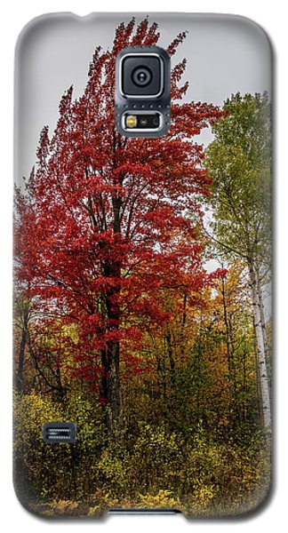 Galaxy S5 Case featuring the photograph Fall Maple by Paul Freidlund