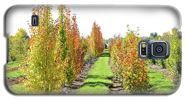 Fall On The Tree Farm Galaxy S5 Case