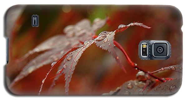 Fall Rain Galaxy S5 Case