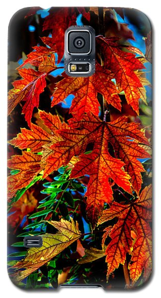 Fall Reds Galaxy S5 Case by Robert Bales