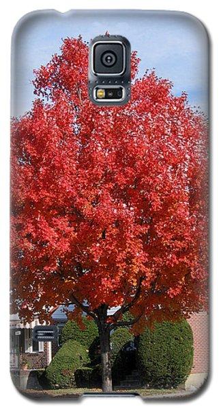 Fall Season Galaxy S5 Case by Suhas Tavkar