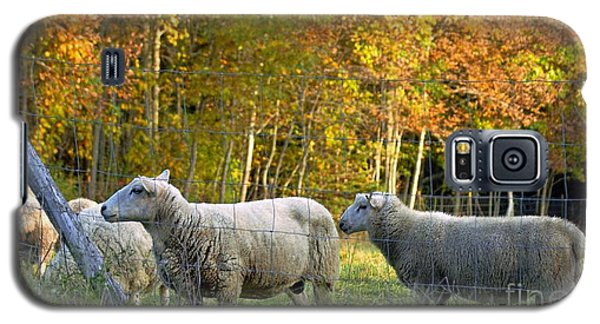 Galaxy S5 Case featuring the photograph Fall Sheep by Christopher Mace