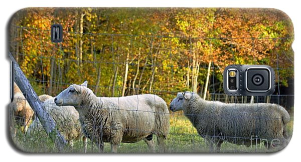 Fall Sheep Galaxy S5 Case by Christopher Mace