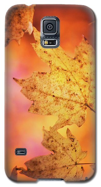 Fall Reveries Galaxy S5 Case