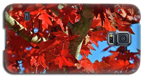 Fall Stars Galaxy S5 Case