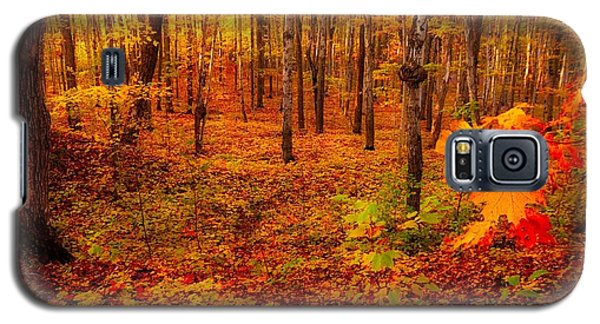 Fall Sugar Bush Galaxy S5 Case