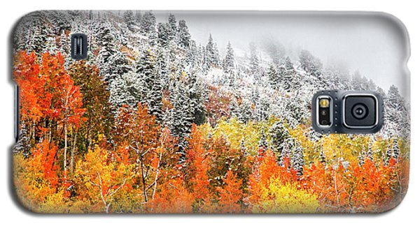 Fall To Winter Canvas Print, Photographic Print, Art Print, Framed Print, Greeting Card, Iphone Case Galaxy S5 Case