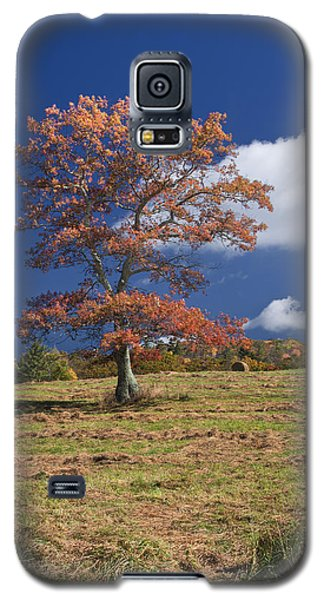 Fall Tree Galaxy S5 Case