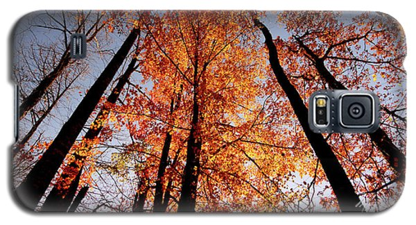 Fall Trees Sky Galaxy S5 Case