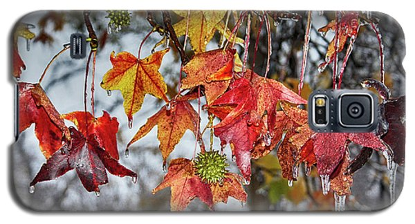 Fall Galaxy S5 Case