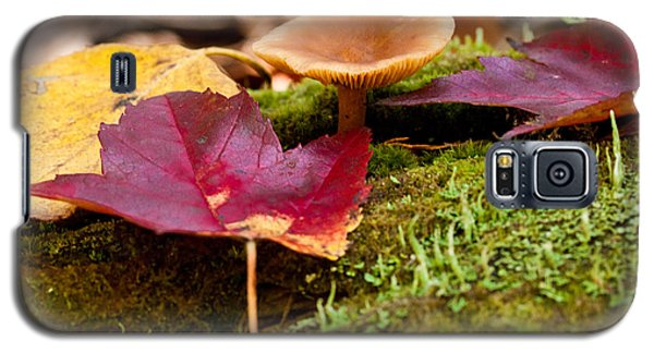 Fallen Leaves And Mushrooms Galaxy S5 Case by Brent L Ander