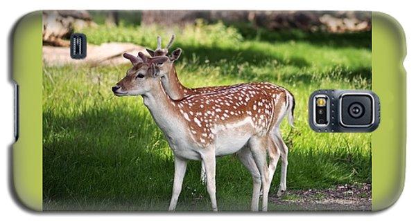 Fallow Deer In Richmond Park Galaxy S5 Case