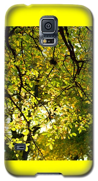 Fall's Unique Light Galaxy S5 Case