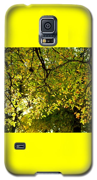 Galaxy S5 Case featuring the photograph Fall's Unique Light by Karen Musick
