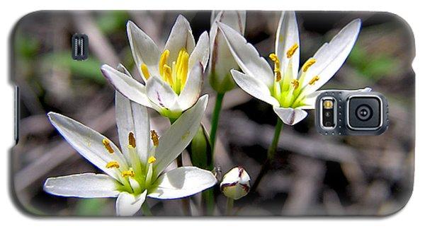 False Garlic Wild Flower Galaxy S5 Case