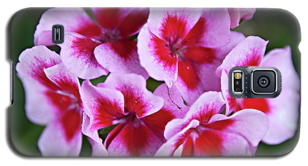Galaxy S5 Case featuring the photograph Family by Sherry Hallemeier