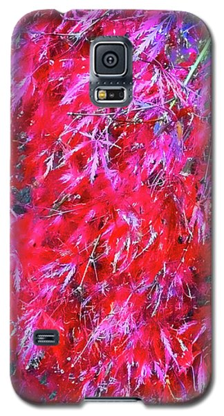 Galaxy S5 Case featuring the photograph Fancy Pants by Roberta Byram