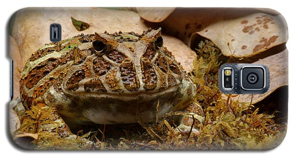 Galaxy S5 Case featuring the photograph Fantasy - Horned Frog by Nikolyn McDonald