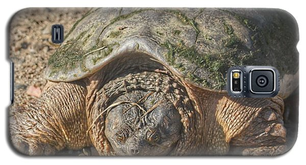 1013 - Fargo Road Turtle Galaxy S5 Case