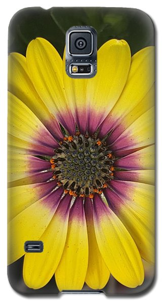 Fascinating Yellow Flower Galaxy S5 Case