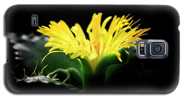 Faucaria Tigerina Tiger's Jaw Galaxy S5 Case by Charline Xia
