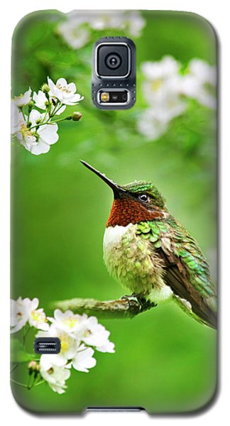 Fauna And Flora - Hummingbird With Flowers Galaxy S5 Case