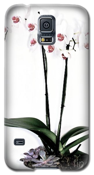 Favorite Gift Of Orchids Galaxy S5 Case by Marsha Heiken