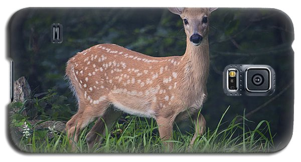 Fawn Doe Galaxy S5 Case