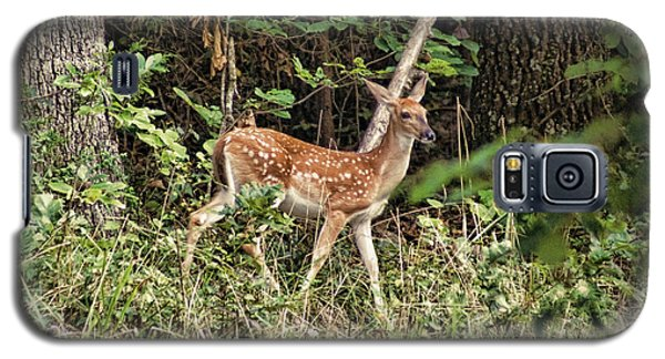 Fawn In The Woods Galaxy S5 Case