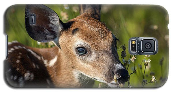 Fawn In Wildflowers Galaxy S5 Case