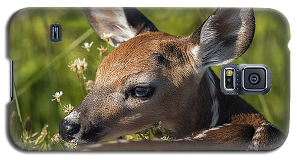 Fawn Over The Shoulder Galaxy S5 Case