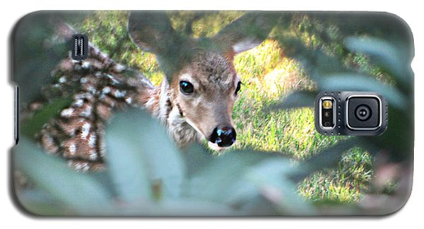 Fawn Peeking Through Bushes Galaxy S5 Case