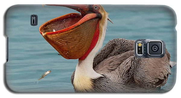 Galaxy S5 Case featuring the photograph Feasting Brown Pelican  by Ram Vasudev
