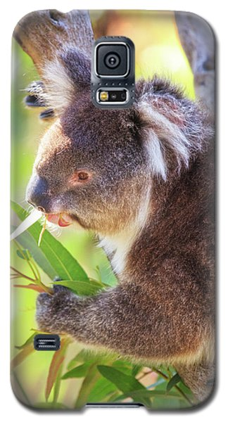 Galaxy S5 Case featuring the photograph Feed Me, Yanchep National Park by Dave Catley
