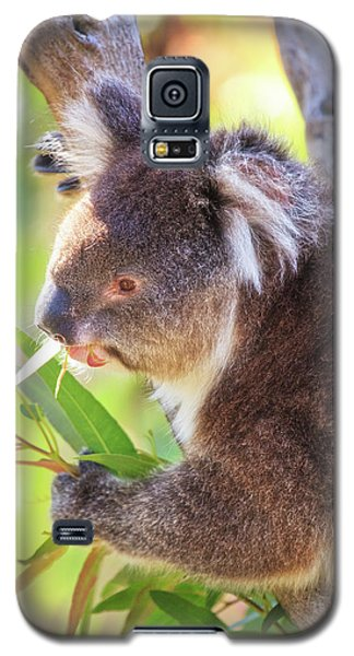 Feed Me, Yanchep National Park Galaxy S5 Case by Dave Catley