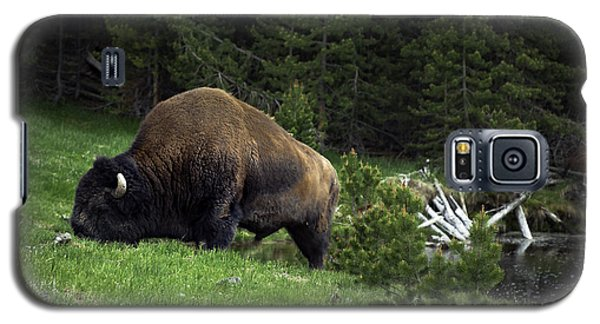 Galaxy S5 Case featuring the photograph Feeding Buffalo by Jason Moynihan