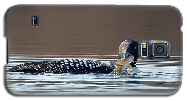 Feeding Common Loon Square Galaxy S5 Case by Bill Wakeley