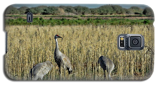 Feeding Greater Sandhill Cranes Galaxy S5 Case