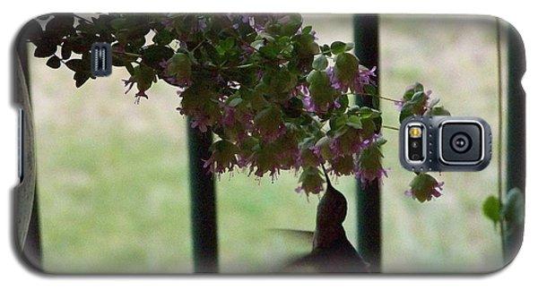 Feeding Hummingbird Galaxy S5 Case