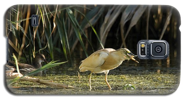 Feeding Squacco Heron Galaxy S5 Case
