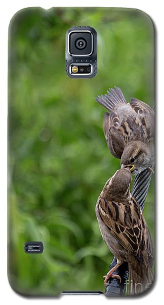Galaxy S5 Case featuring the photograph Feeding Time by Brian Roscorla
