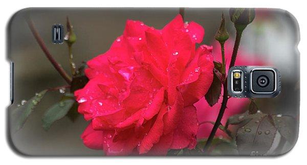 Feeling Rosy Galaxy S5 Case