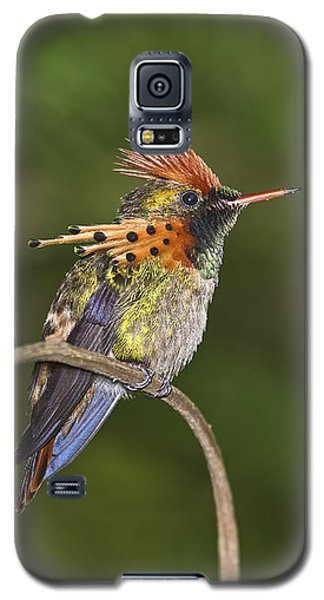 Feisty Little Fellow..  Galaxy S5 Case