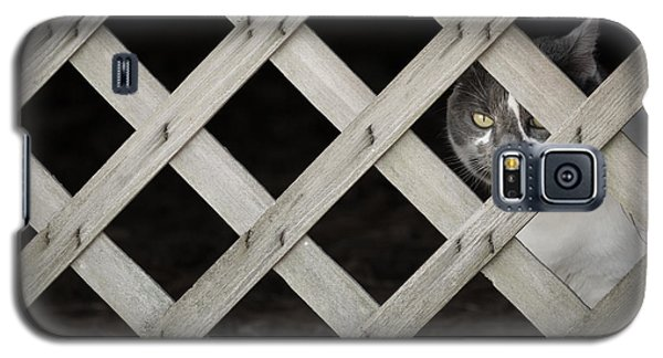 Feline Fence Galaxy S5 Case