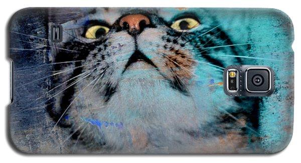 Feline Focus Galaxy S5 Case by Kathy M Krause