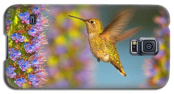 Female Anna's Hummingbird Huntington Beach California Galaxy S5 Case