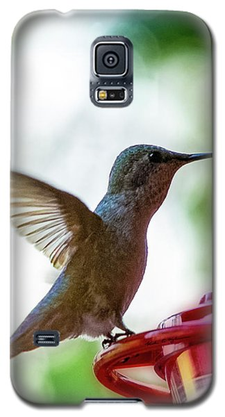 Galaxy S5 Case featuring the photograph Female Anna's Hummingbird V24 by Mark Myhaver
